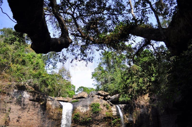 森林和瀑布 库存照片