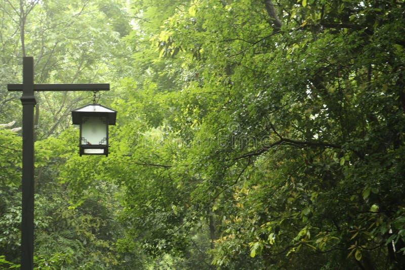 森林和灯在杭州 免版税图库摄影