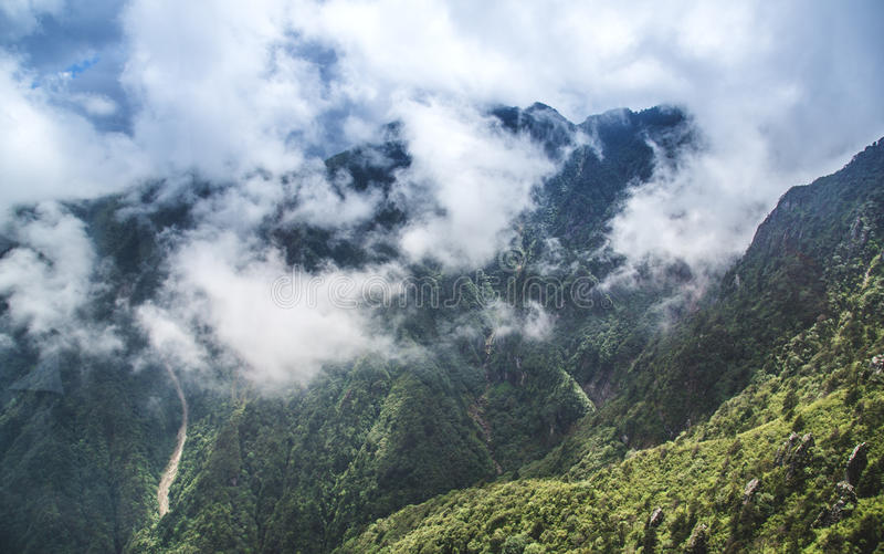 森林和薄雾 免版税库存照片