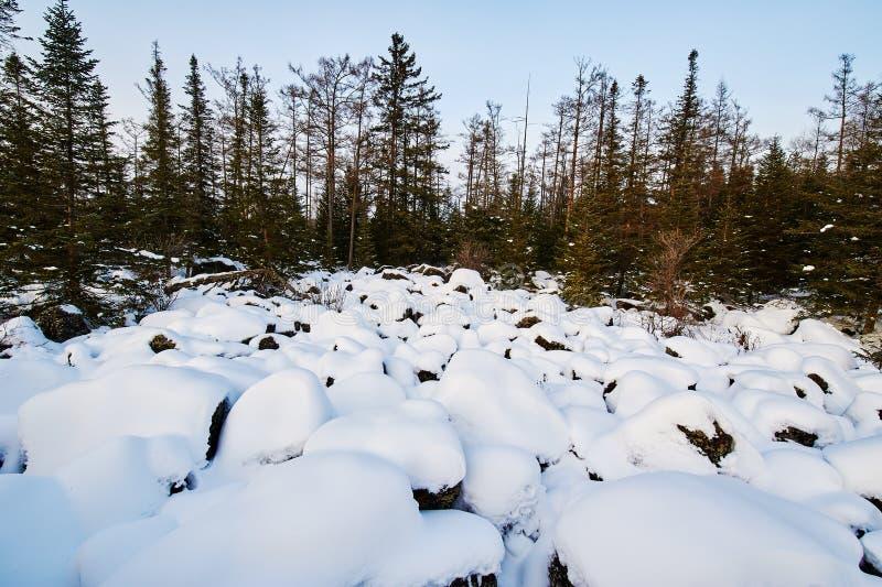 森林和雪 免版税图库摄影
