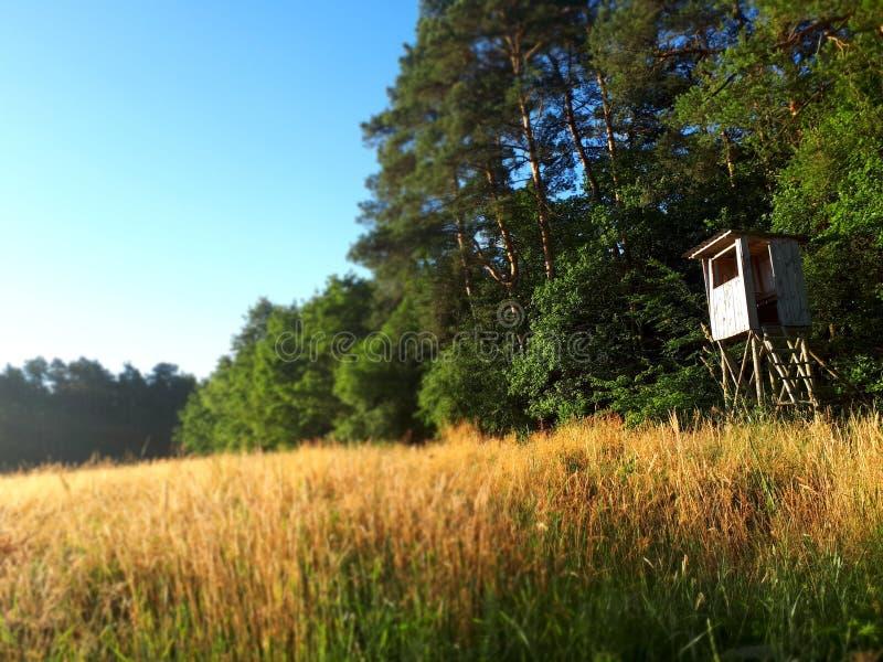 森林和寻找区域 免版税库存照片