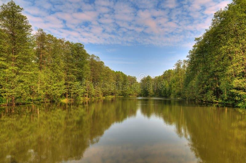 森林喜欢通配 库存照片