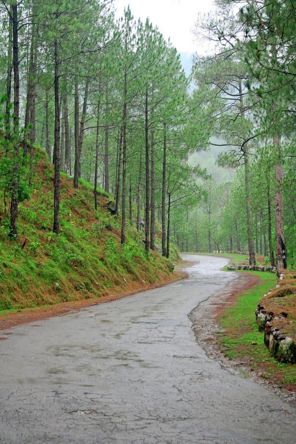 森林喜马拉雅印度预留路通过绕 图库摄影