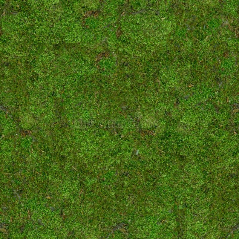 森林土壤碍手碍脚用绿色青苔盖 r 免版税图库摄影