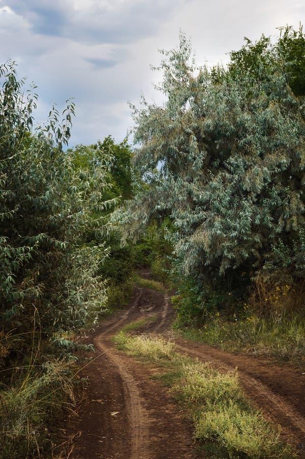 森林土路 免版税图库摄影