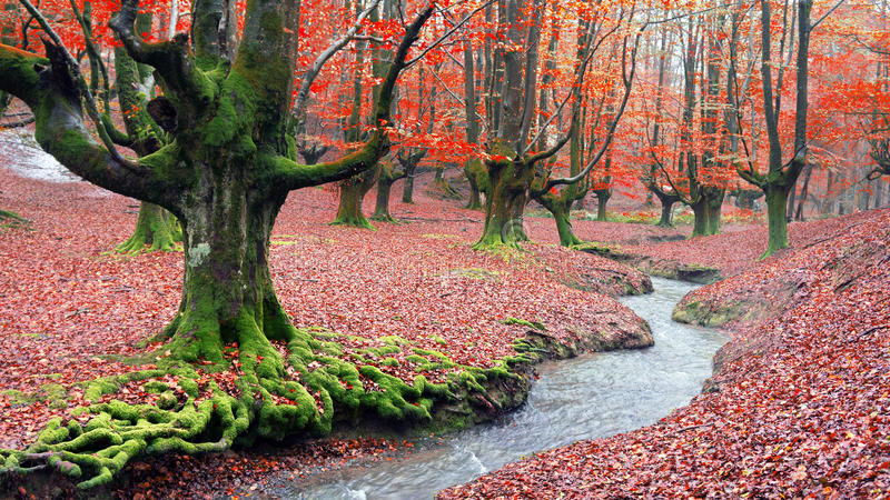 森林在与小河的秋天 库存照片