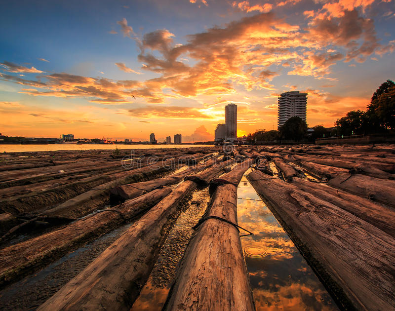 森林在与日落天空的水中 库存图片