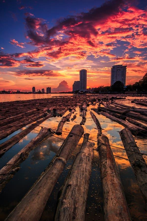 森林在与日落天空的水中 免版税库存图片