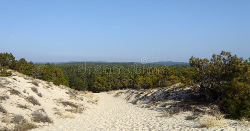 森林在兰德斯国家(地区)法国 图库摄影