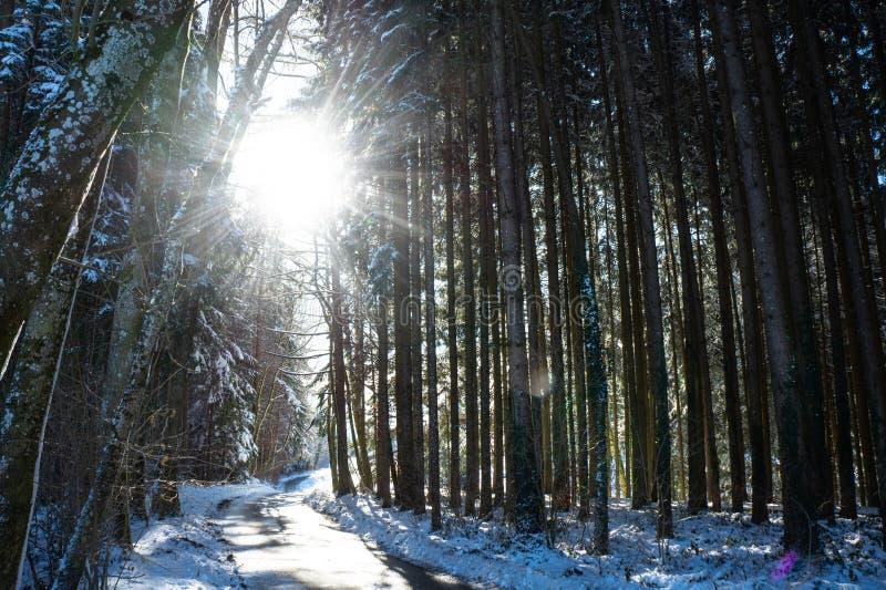 森林在冬天,森林,太阳光芒 免版税库存图片