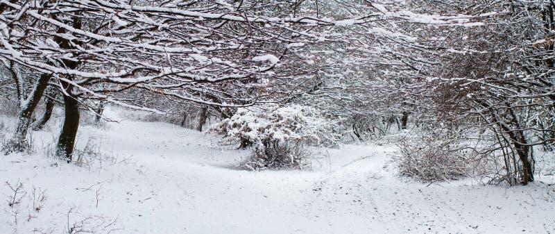 森林在冬天-全景 库存图片