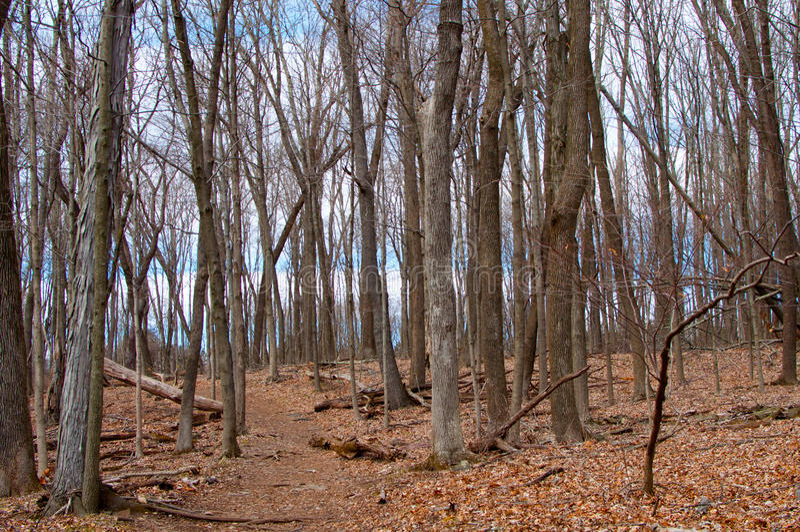 森林在冬天 免版税库存照片