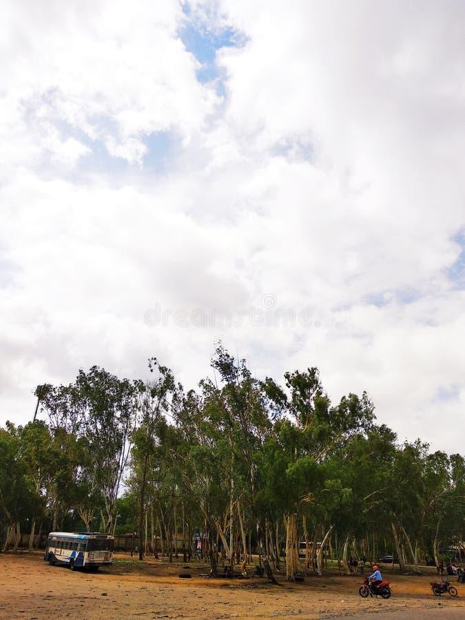 森林在印度 库存照片