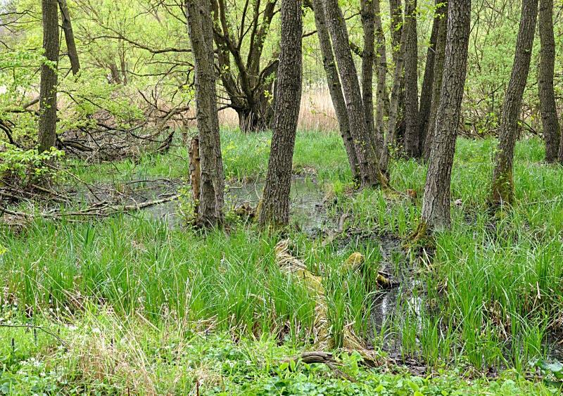 森林在夏天 库存图片