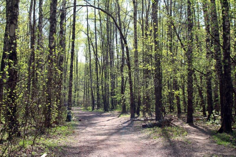 森林在春天 库存照片