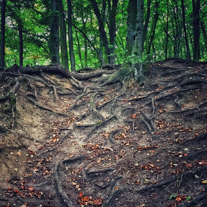 森林在格但斯克 免版税库存照片