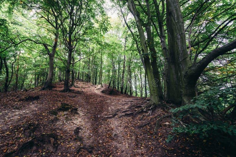 森林在格但斯克 库存图片