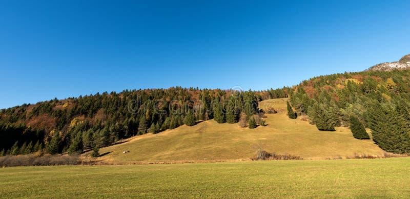 森林在秋天-特伦托自治省女低音阿迪杰意大利 库存照片