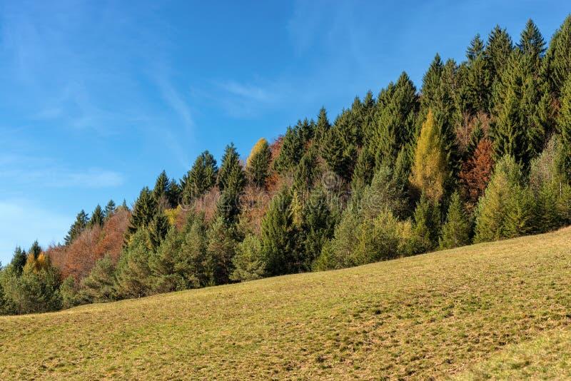 森林在秋天-特伦托自治省女低音阿迪杰意大利 免版税库存照片