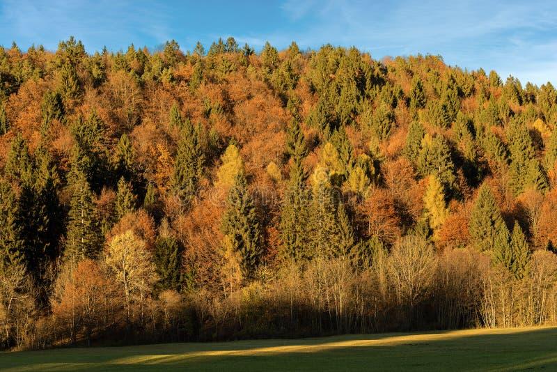 森林在秋天-特伦托自治省女低音阿迪杰意大利 免版税库存图片