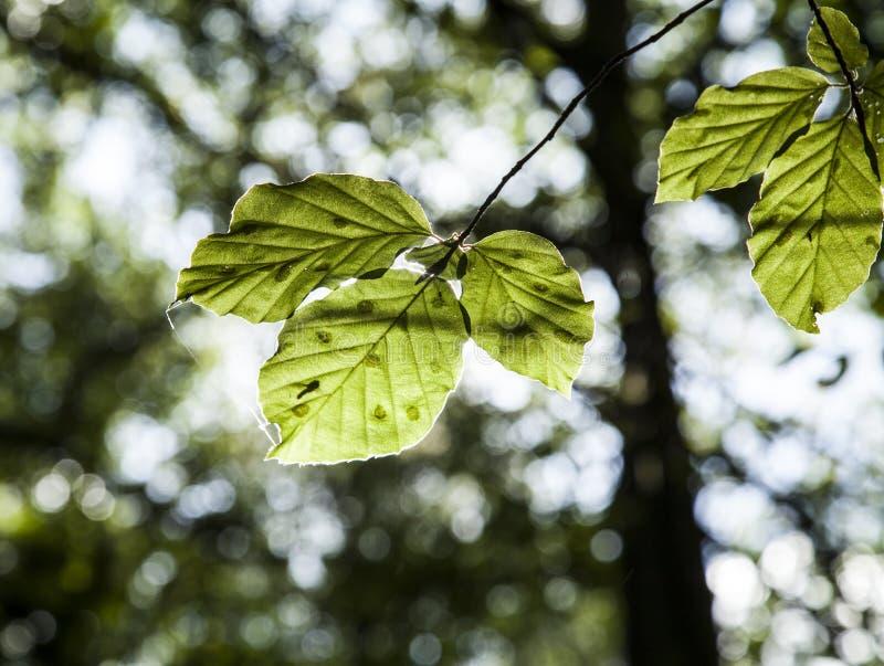 森林在秋天-被日光照射了叶子 免版税库存图片