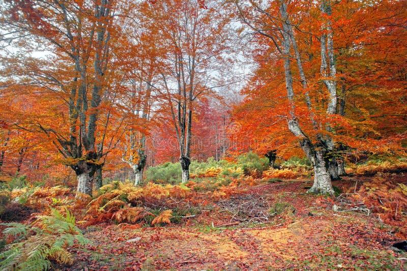 森林在秋天 图库摄影