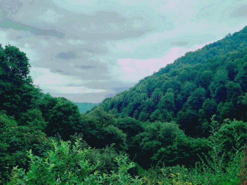 森林在迪利然国立公园 库存图片