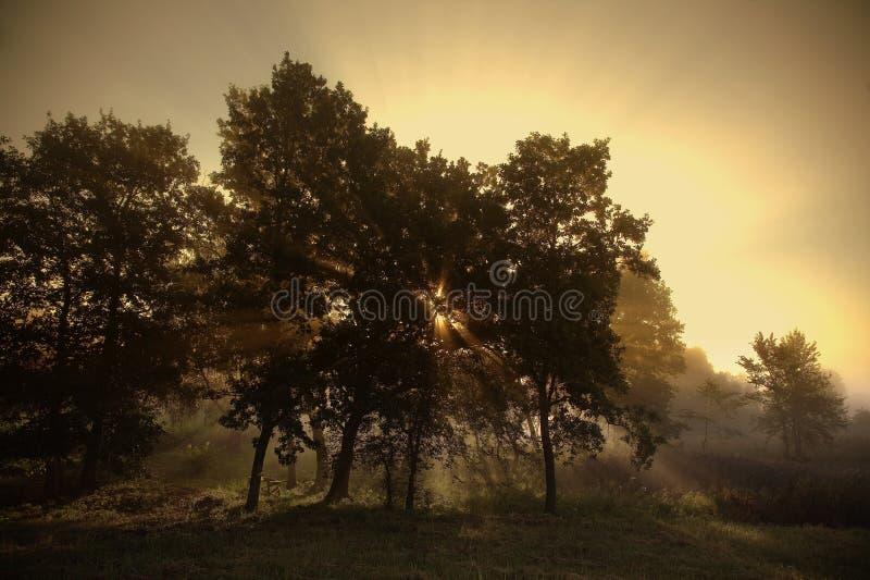 森林在阳光下 图库摄影