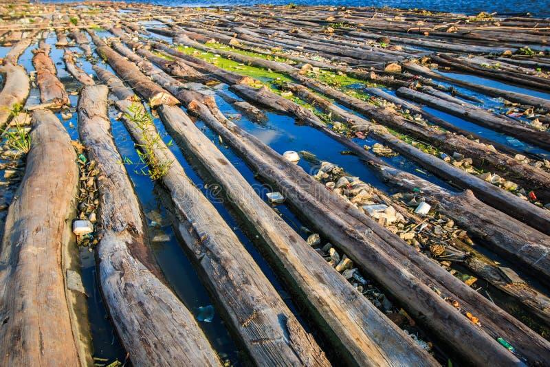 森林在水中 免版税库存图片