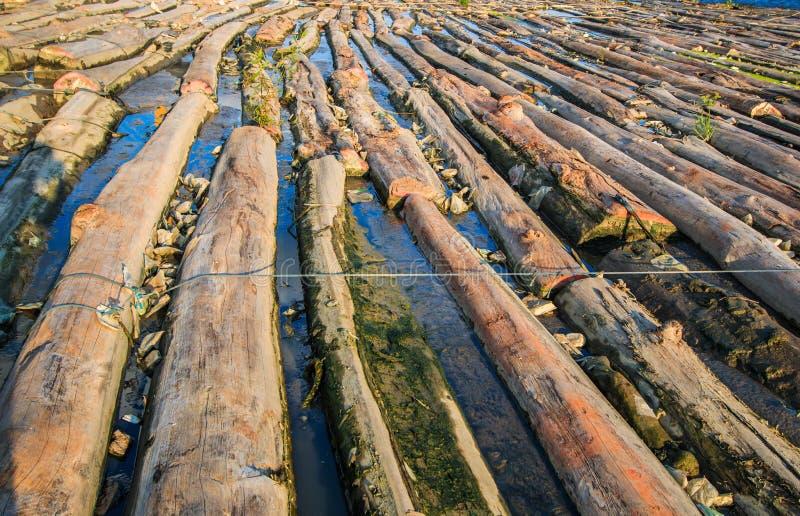 森林在水中 库存图片