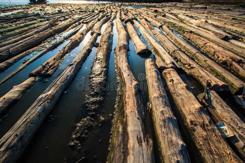 森林在水中 图库摄影