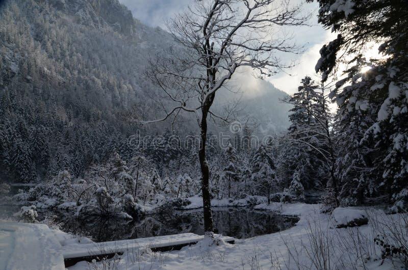 森林在巴法力亚阿尔卑斯 免版税库存图片