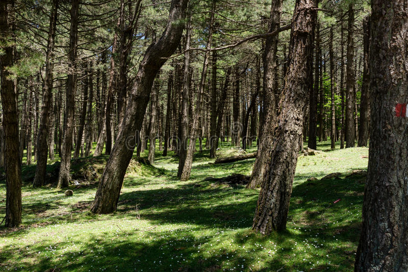 森林在Aspromonte 免版税图库摄影