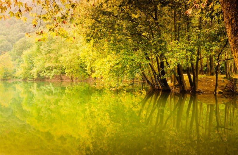 森林地包围的湖 库存照片