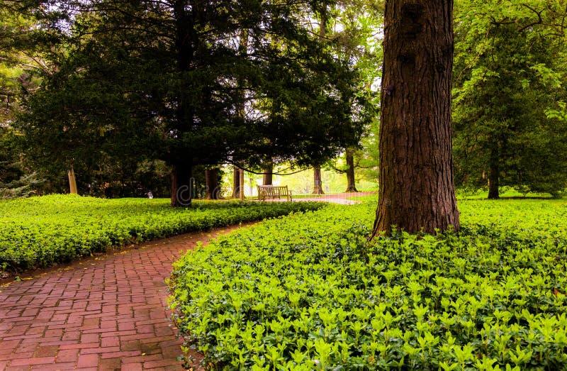 森林地在Longwood庭院的砖道路, PA 免版税库存图片