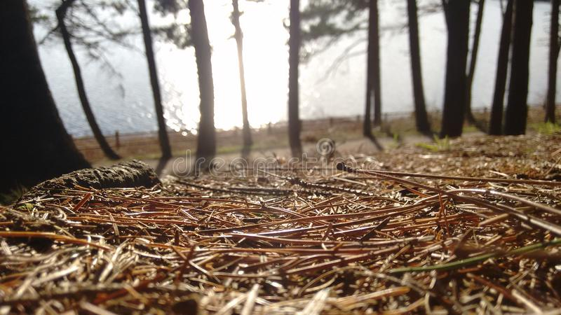森林地板 免版税库存照片