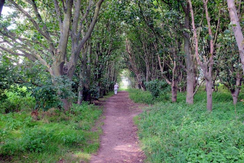 森林地步行 免版税图库摄影