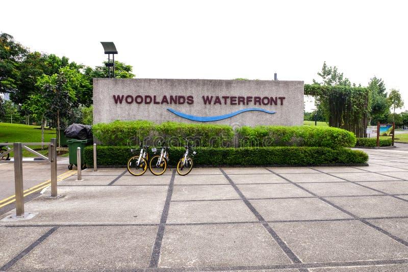 森林地江边新加坡 免版税库存图片