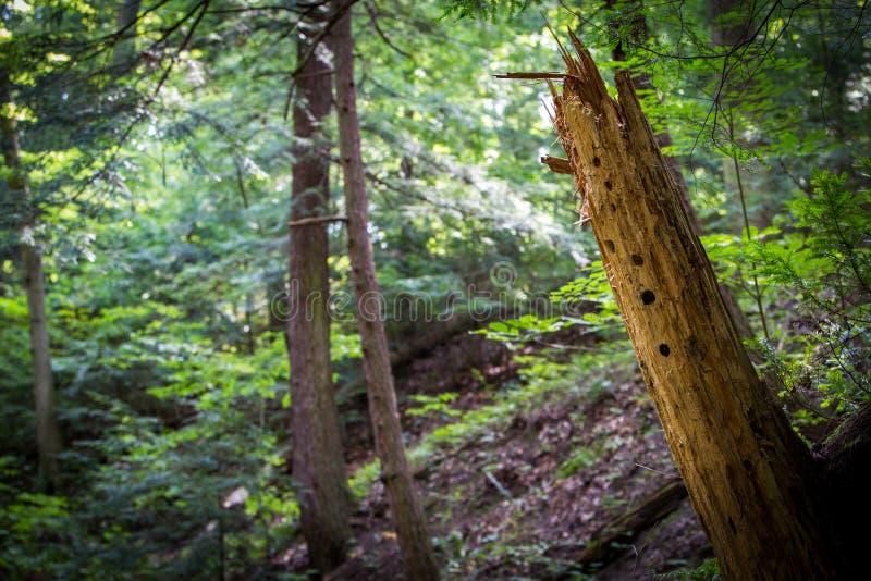 森林地背景 库存图片