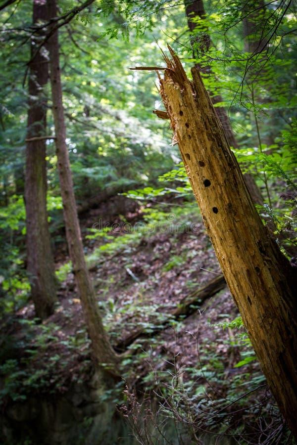 森林地背景 免版税库存照片