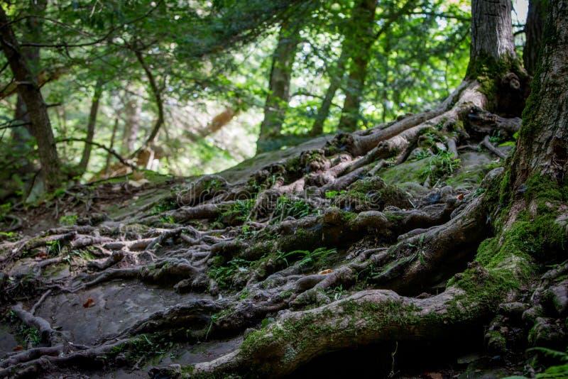 森林地背景 免版税图库摄影