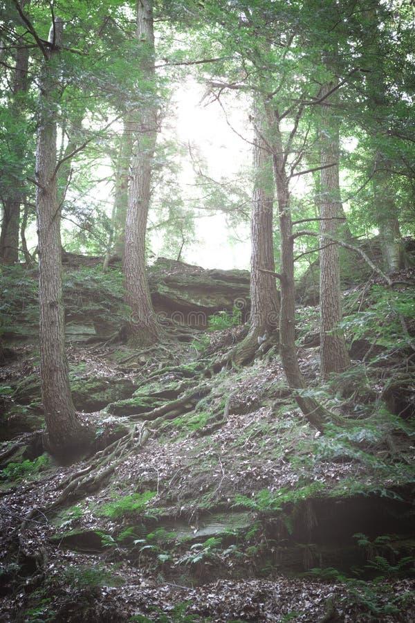 森林地背景 库存照片