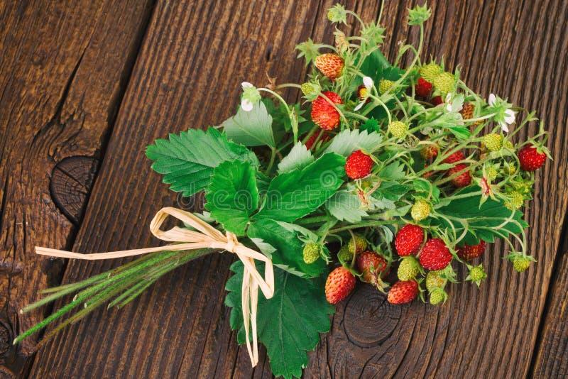 森林地草莓-野草莓(草莓属vesca),高山草莓 免版税库存照片