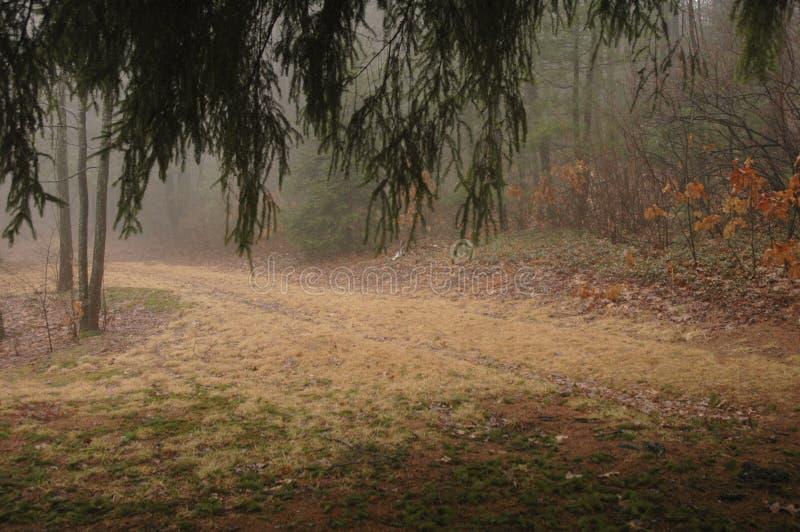 森林地路径 免版税库存照片