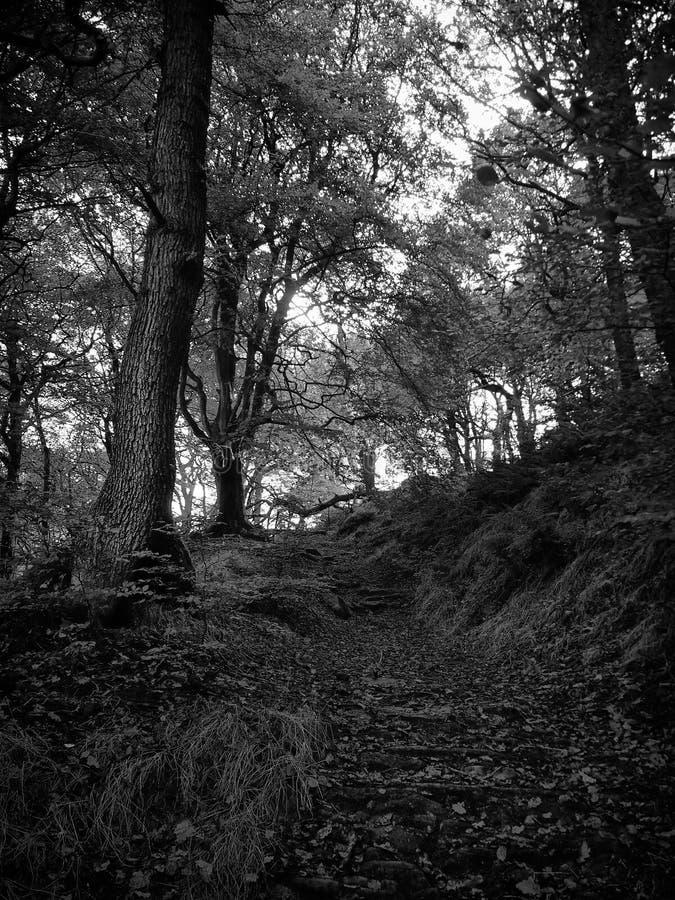 森林地路 免版税库存照片