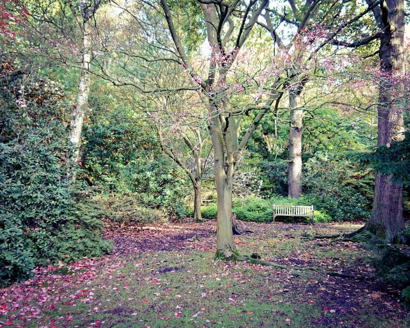 森林地长凳 图库摄影
