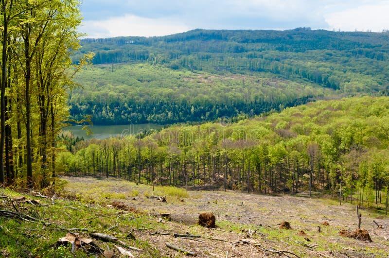 森林地风景,山毛榉树森林在春天 库存照片