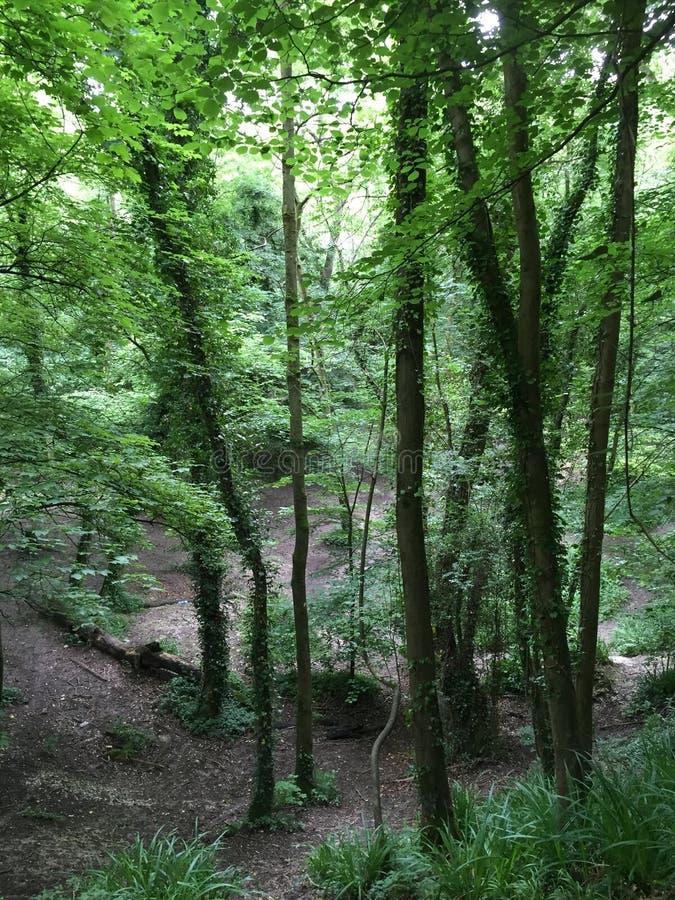 森林地,绿地,黑公园Denham 免版税库存照片
