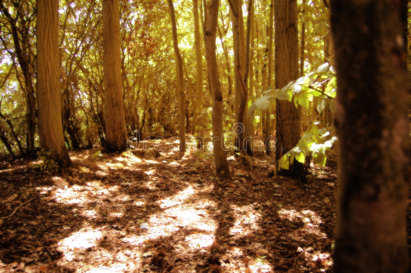 森林地 免版税库存照片