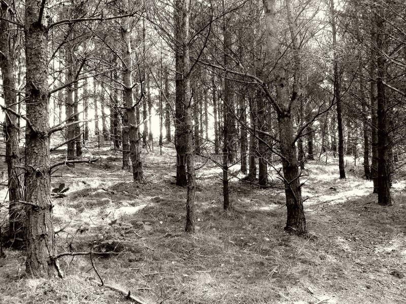 森林地 库存照片